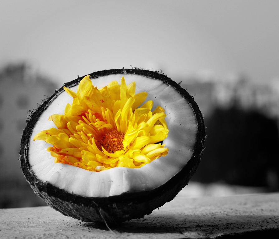 flower inside cracked coconut